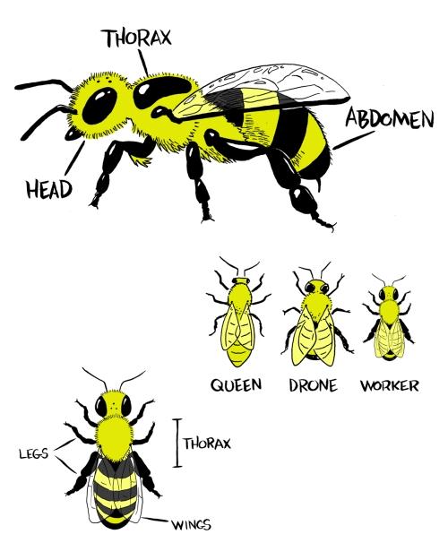 technicalbees